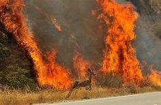 ap_wildfires_13.jpg (600×392)