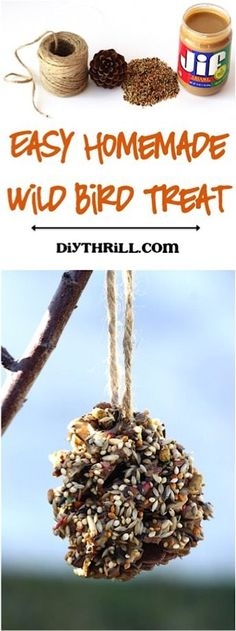 Wild Bird Treats!  How to make an easy homemade treat for the birds!  These are SO simple to make and a great addition to your backyard tree branch!