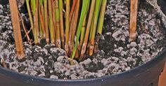 Das hat fast jeder Hobbygärtner schon erlebt: Die Blumenerde der frisch umgetopften Zimmerpflanze schimmelt plötzlich. Wir erklären, wie der Schimmel entsteht und was man dagegen unternehmen kann.