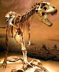 Albertosaurus libratus   From the Cretaceous