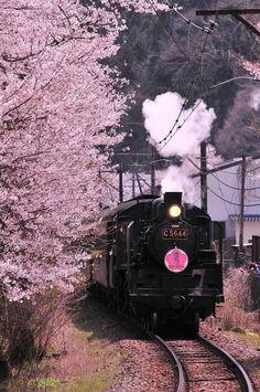 Aesthetic Japan, Japanese Aesthetic, Cherry Blossom Japan, Cherry Blossoms, Places To Travel, Places To Visit, Beautiful Places, Beautiful Pictures, Japan Landscape