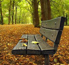 Autumn Bench | Alexendra Park, Manchester. Explored...:) | Asim Shahzad | Flickr