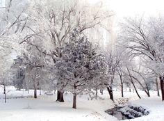 beautiful frost