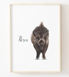 Watercolor Bison Print by Louise Dean at Shop Loudini