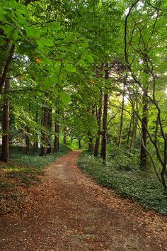 Pölcz Klaudia - kisklau: Botanikus kertben Country Roads