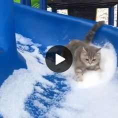 Cute Cats Playing on Slide