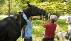 """""""Ostwind"""" mit seiner Pferdetrainerin Kenzie Dysli ( links im Bild) und Pferdemaskenbildnerin Barbara Rönneburg"""