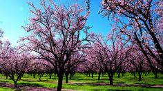 Fotos de la primavera ( Hermosas imagenes ) - Taringa!