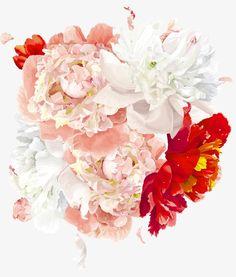 Peony, Ladybug, Chrysanthemum, Daisy PNG Image