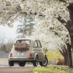 super ideas for cute cars vintage fiat 500 Fiat Cinquecento, Fiat 500c, Cars Vintage, Retro Cars, Fiat Cars, Cute Cars, Small Cars, Subaru, Cars And Motorcycles