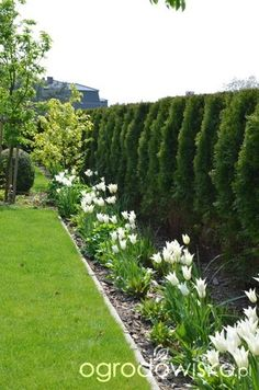 Ogród tworzę nowoczesny czyli wewnętrzna walka jak nie zostać kokoszką :) - strona 1714 - Forum ogrodnicze - Ogrodowisko