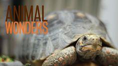 Tortoise information