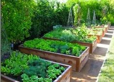Urban Garden Design 20 Good Crops for a Potager Garden Backyard Vegetable Gardens, Potager Garden, Vegetable Garden Design, Outdoor Gardens, Diy Garden Bed, Garden Boxes, Garden In The Woods, Garden Planning, Amazing Gardens