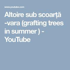Altoire sub scoarță -vara (grafting trees in summer ) - YouTube
