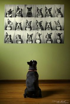 Selected by drawDOGS.com artist Stephen Kline for an ongoing exhibition of Pinterest dog art photography.
