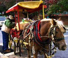 Baltimore Arabber with his horse and cart. Arabbers are an integral part of the city's culture and history, and Baltimoreans are very proud of this unique element in our heritage.