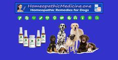 Homeopathic Medicine, Holistic Medicine, Holistic Wellness, Holistic Remedies, Homeopathic Remedies, Health And Fitness Tips, Health And Nutrition, Dog Care, Natural Healing