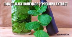 Learn how to make homemade peppermint extract with vodka or another clear liquor. Homemade extracts are perfect for holiday gifts and are much more potent and less expensive than store-bought extracts! It's also a good way to use up the summer harvest of mint leaves.