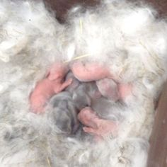 How to Care for Newborn Rabbits: 6 Steps (with Pictures)