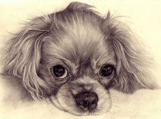 Jake,pencil drawing. by andream66, via Flickr