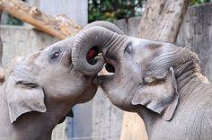 i seriously adore #elephants