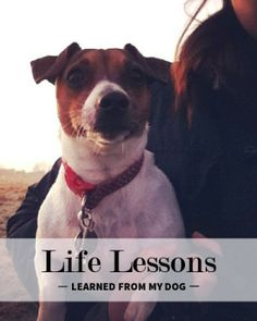 5 Life Lessons You Can Learn from Man's Best Friend