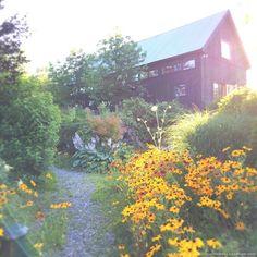 michaela harlow studio / wildflower drift