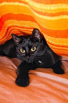 Orange blanket and black cat. Beautiful combo.