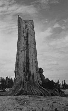 Ansel Adams, American, Untitled (Georgia O'Keeffe and Tree), c. 1938