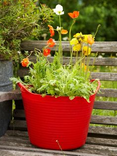 Learn How To Plant A Container Garden For Various Types Of Poppies With This Step