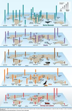 This infographic takes a look at the breakdown of the world's diverse species.