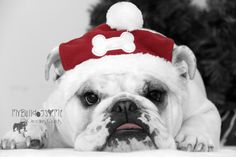 English Bulldog Christmas Card Card 21 / by BulldogGreetingCards, $3.00