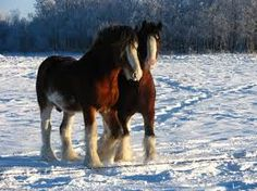 Clydesdale Horse - News - Bubblews