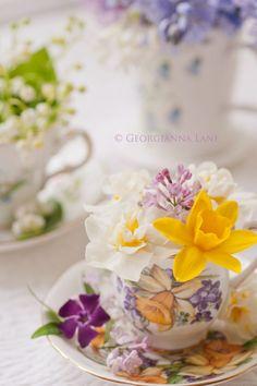 daffodil in a tea cup