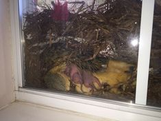 Nesting Squirrels in my Friends Window. #Follow Me #CooliPhone6Case on Twitter Facebook Google Instagram LinkedIn Blogger Youtube