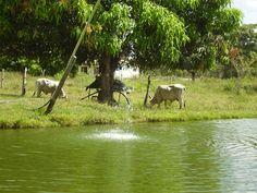 Caroní (estado Barinas)
