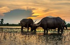 Découvrez et visitez le Laos, Pays au million d'éléphants