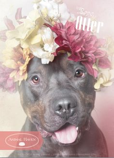 Flower Power (Otter) by Sophie Gamand I Love Dogs, Cute Dogs, Animals And Pets, Cute Animals, Pitbull Terrier, Beautiful Dogs, Animal Shelter, Dogs And Puppies, Doggies