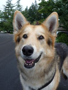 5 Great Reasons Why Senior Dogs Rule and Puppies Drool
