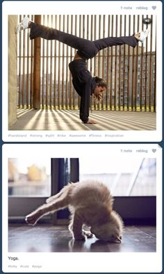 My new favorite martial art, Catpoeira. (Cat + Capoeira)