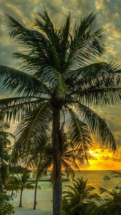 sunset in the Maldives Ocean Wallpaper, Tree Wallpaper, Sea And Ocean, Ocean Beach, Palm Tree Background, Background Images, Landscape Photography, Nature Photography, Palmiers