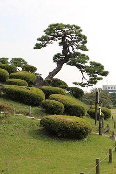 NIHON 2011 nen - TÔKYÔ Hama Rikyu Garden niwaki