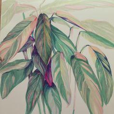 hand drawn palm leaves