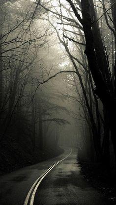 Creepy Road Forest Trees Fog IPhone 5 Wallpaper HD - Free
