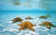 10 Snorkeling Spots in Roatan - Starfish Alley