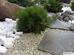Styleroom.fi - Karkki - liuskekivi,kääpiövuorimänty.. Dry Garden, Terrace Garden, Terrace Ideas, Back Gardens, Outdoor Gardens, Garden Types, Shade Garden, Garden Planning, Garden Projects