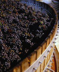Private cellar: luxury brut or rosé - Champagne Veuve Clicquot   Veuve Clicquot