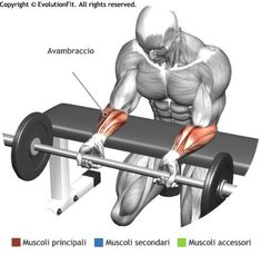 Forearms - Palm Down Wrist Curl Over a Bench Muscle Fitness, Mens Fitness, Yoga Fitness, Fitness Tips, Workout Fitness, Bodybuilding Training, Fitness Bodybuilding, Forearm Workout, Biceps Workout
