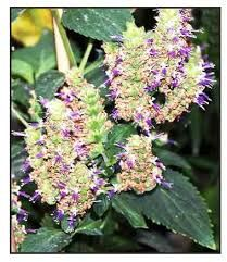 Image result for images of insect repellent plants Insect Repellent Plants, Insects, Image, Flowers, Insect Repellent, Royal Icing Flowers, Flower, Florals, Floral