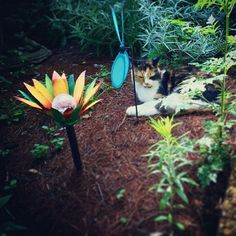 Another beautiful customer picture sent to me! She said her cat loves the solar light flower too! Awww! :)